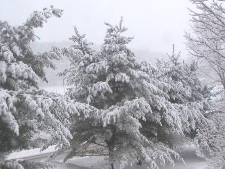 Winter outside my window - Paula Beardell Krieg
