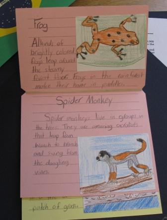 A third grader's book about the rainforest