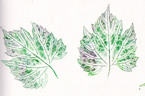 green grape leaves 2