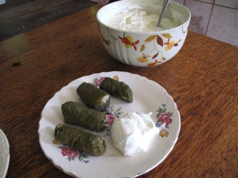 Stuffed Grape Leaves and Yogurt