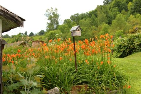 Mary L's Birdhouse with Daylilies