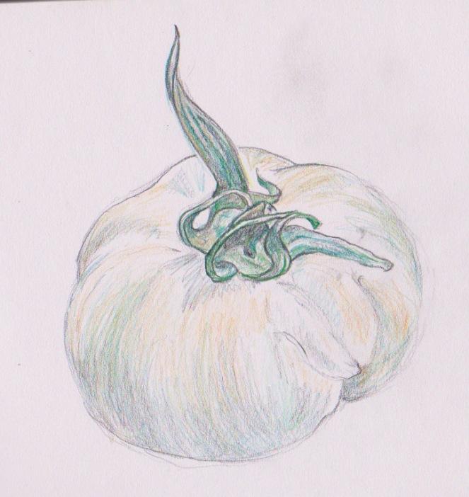 pencil drawing by Paula Beardell Krieg