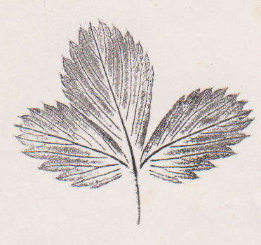 Rasberry Leaf, inked and pressed by hand