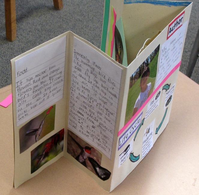Adirondack Birds, Chelsea's Hummingbird Book