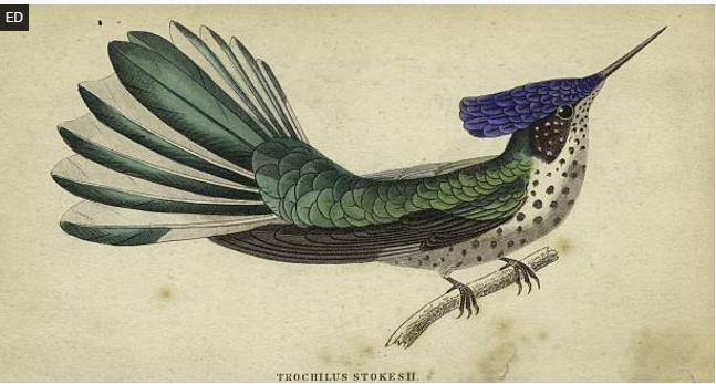 Hand-colored engraving from the Getty Collection